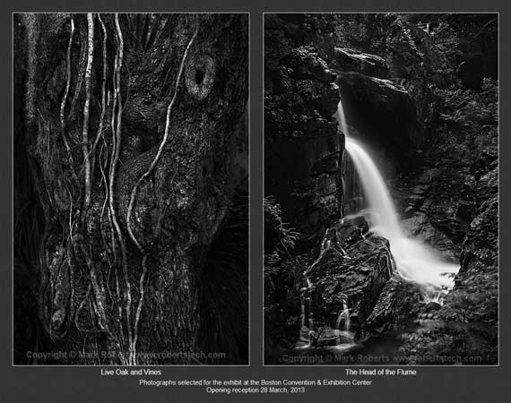 Two photographs by Mark Roberts: 'Live Oak and Vines' and